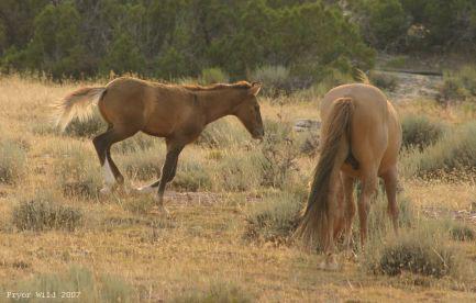 Durango and colt
