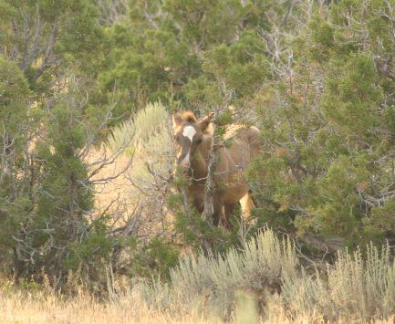 Durango's colt
