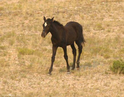 Seattle's foal 2