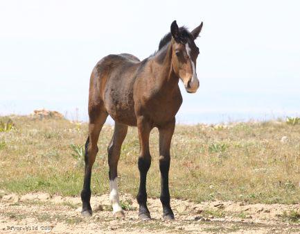 Trigger foal