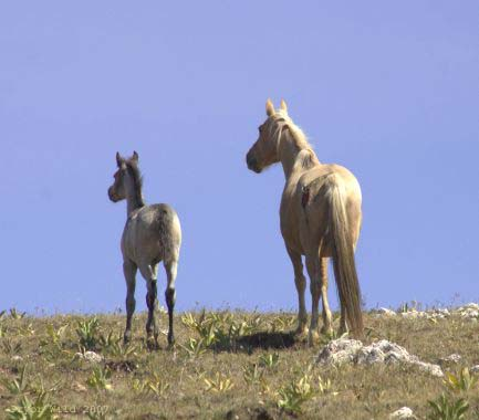 Phoenix and colt