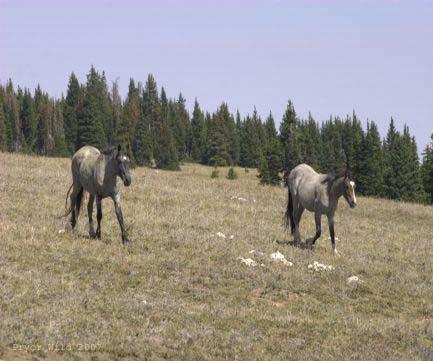 Teton and colt