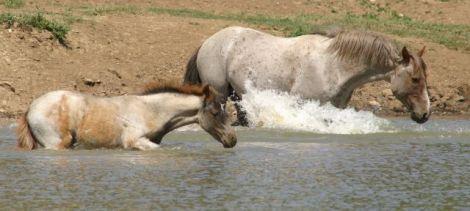 Coronado and foal