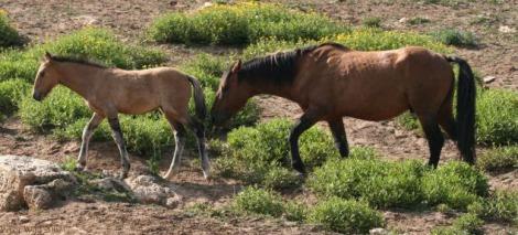 Shaman Foal