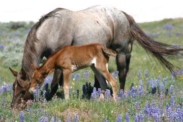 Lakota baby 2