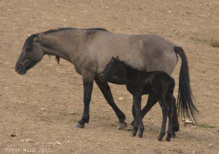 Aztec and filly