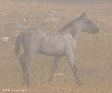 Baja foal