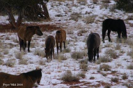 Lakotafamily