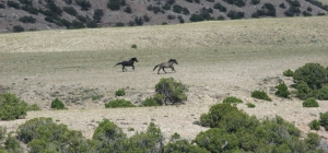 Cortez and Lone Wolf have a battle of endurance as they race across Mustang Flats.