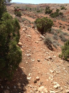 Wild horse trail leading to Cottonwood Springs