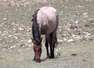 La Brava recently lost her foal through separation and ultimately death of the foal.