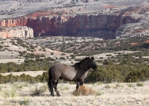 Johnston and Big Horn Canyon