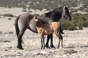 La Niña's face is very dark and may indicate grulla. Time will tell!