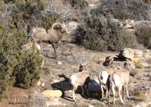Band of Big Horns