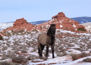 Mato and his parents, Sitting Bull and Cecelia were grazing and eating snow just south of the Red Hills.