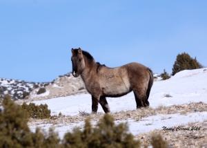 Montana (2012 colt)