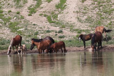 Duke's band at Kruger's Pond.