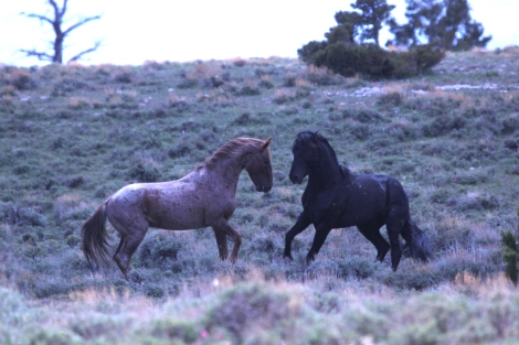 Tecumseh and Inali