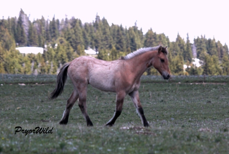 Nahwa, 2013 colt of Baja and Washakie