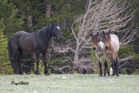 Stallion, Hernando, with Niobrara and Maelstrom