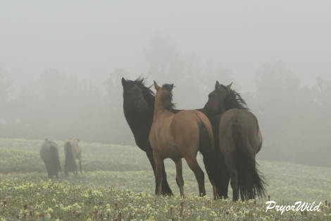 Three bachelors in the mountain mist.
