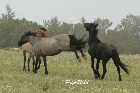 Audobon placed herself between the stallion and her daughter. And then she fired!