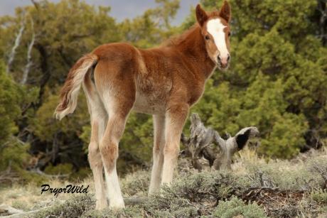 Duke's Foal